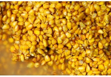 Maize (Cooked) 2kg