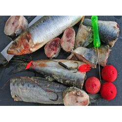 Frozen Fish Dead baits